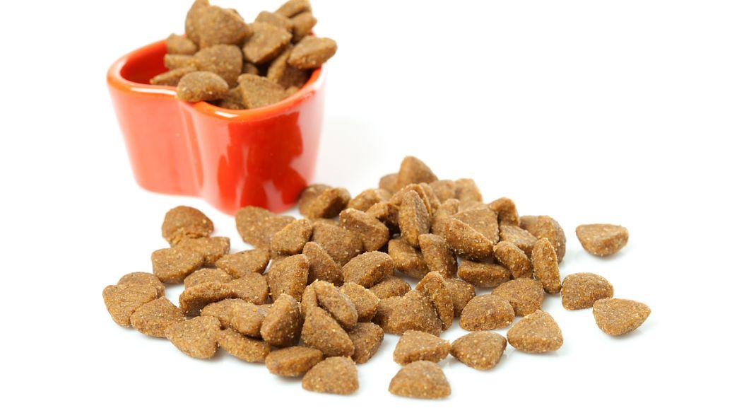 吃狗糧收入幾十萬,卻少有人能勝任,寵物食品試吃為啥那么賺錢?