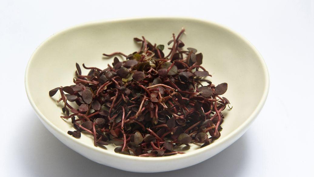 养肝茶的功效有什么,喝什么养肝茶作用最好?